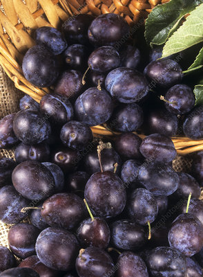 Damson fruit