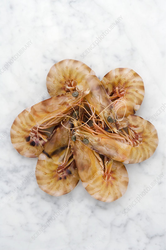 Fresh tiger prawns - Stock Image H110/4188 - Science Photo ...