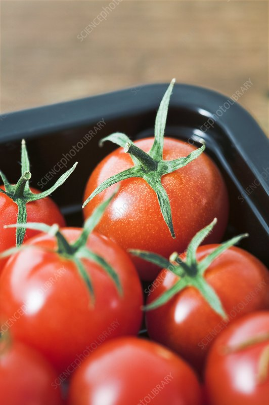 Tomatoes in a tray