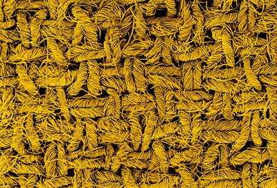 Tinted SEM of wool crepe woven fabric