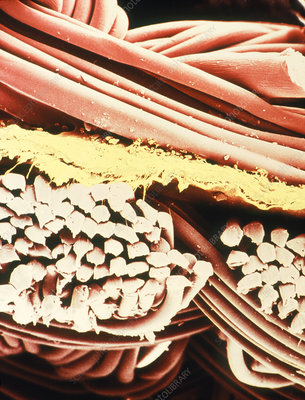 False-colour SEM of the fabric Gore-Tex