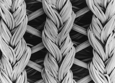 SEM of lycra/nylon woven fabric