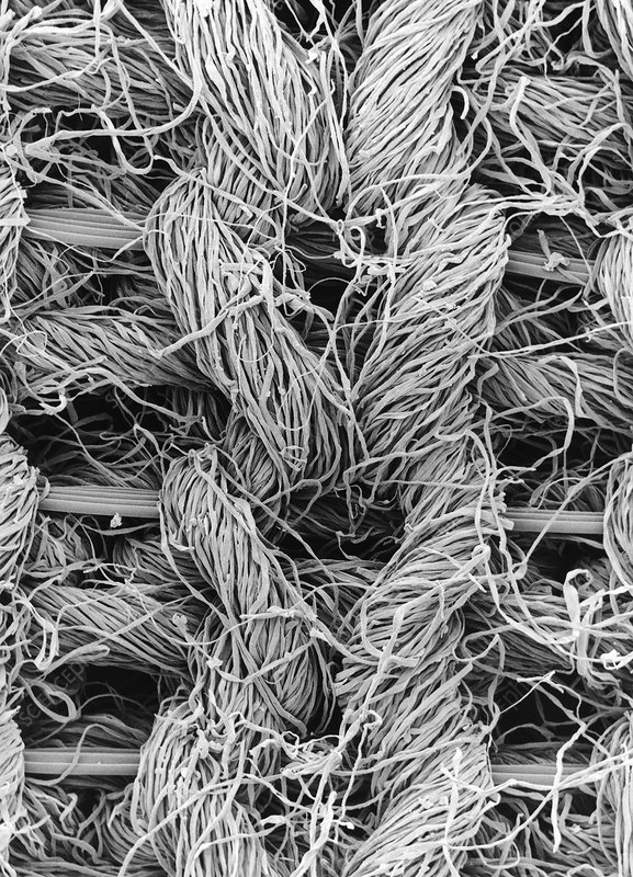 SEM of cotton & Lycra woven fabric