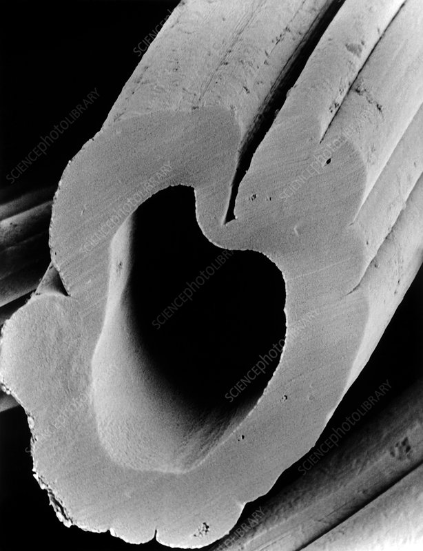 SEM of hollow viscose fibre