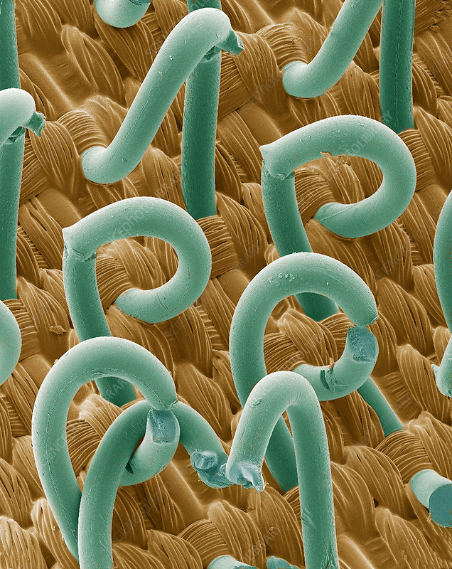 SEM of a hooks and loops fastener