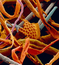 SEM of sample of household dust
