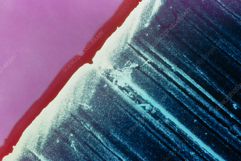 Coloured SEM of the cutting edge of a razor blade
