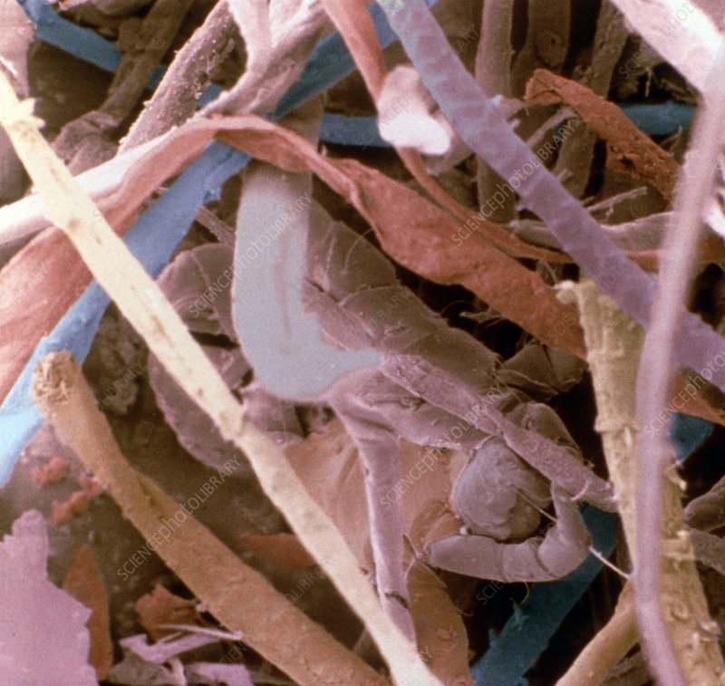 Coloured SEM of household dust from Brazil