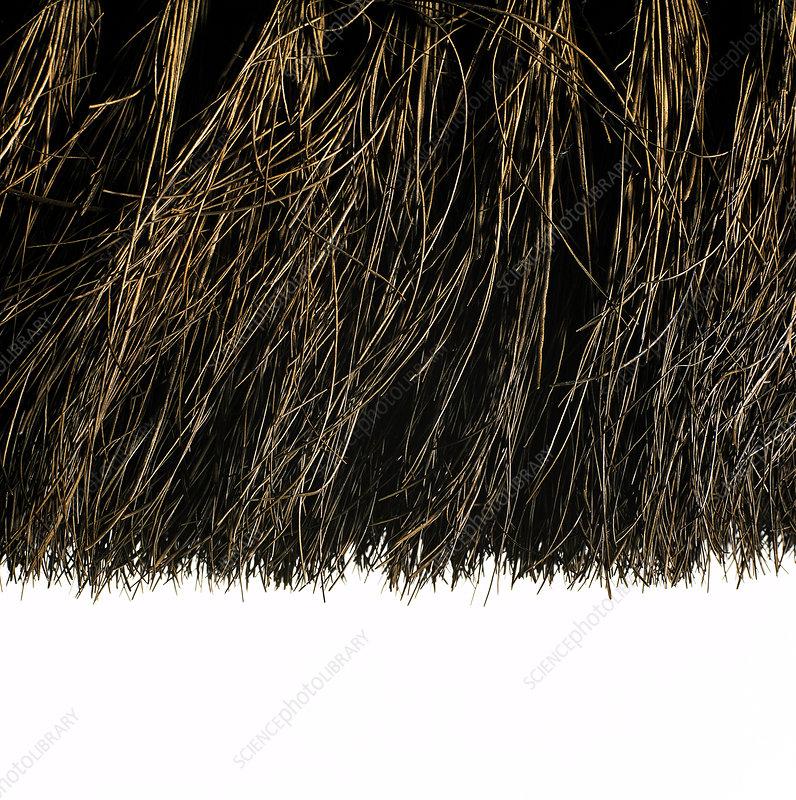 Broom head bristles