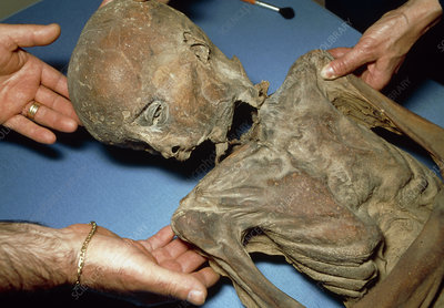 Mummified body of a boy dating from around 1600