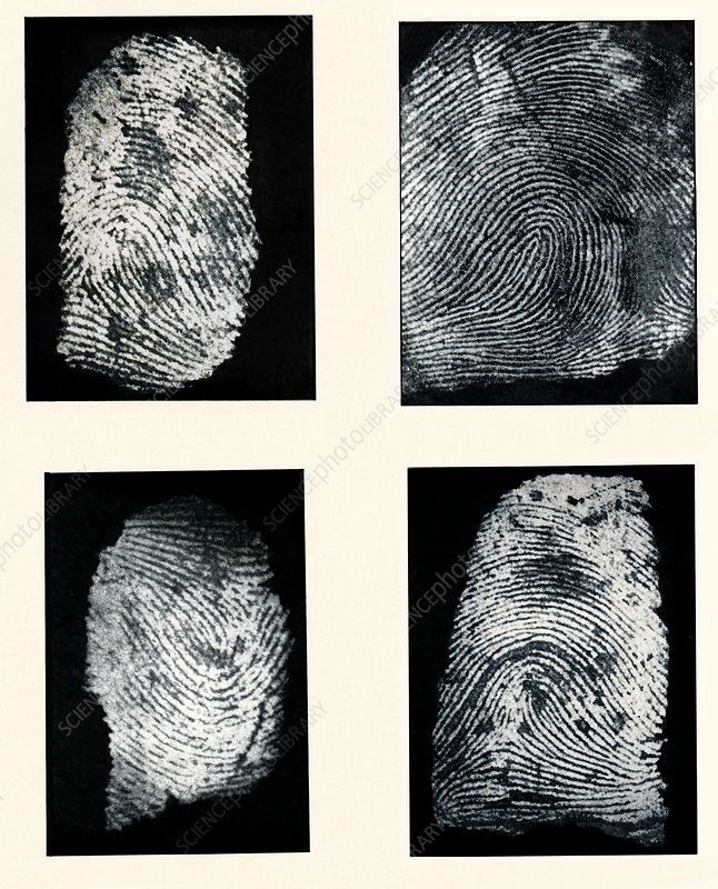 Fingerprints made visible with ink