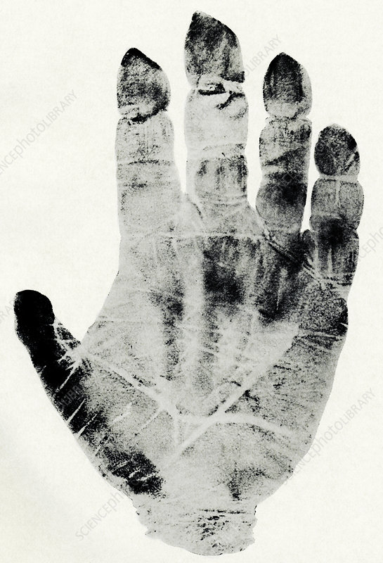 Handprint of gorilla