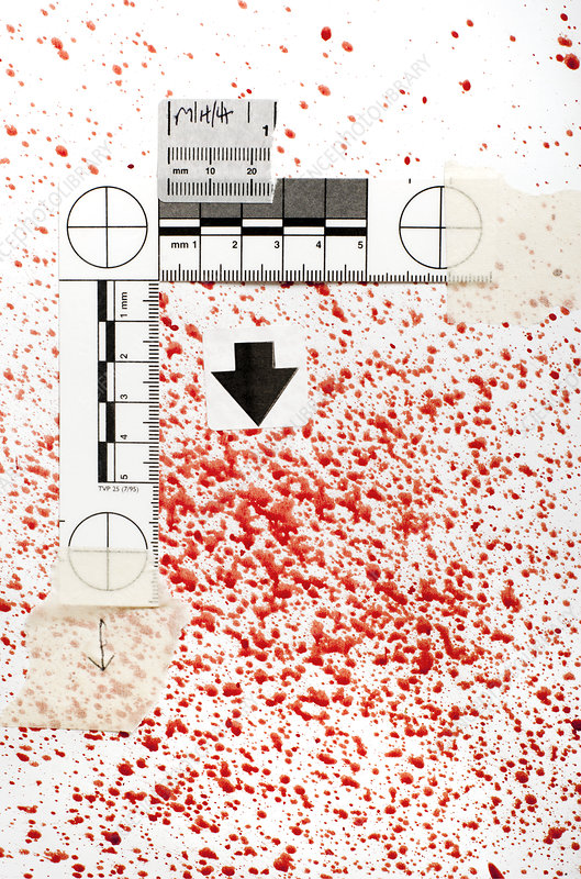 Blood Spatter Analysis Stock Image H200 0630 Science Photo Library