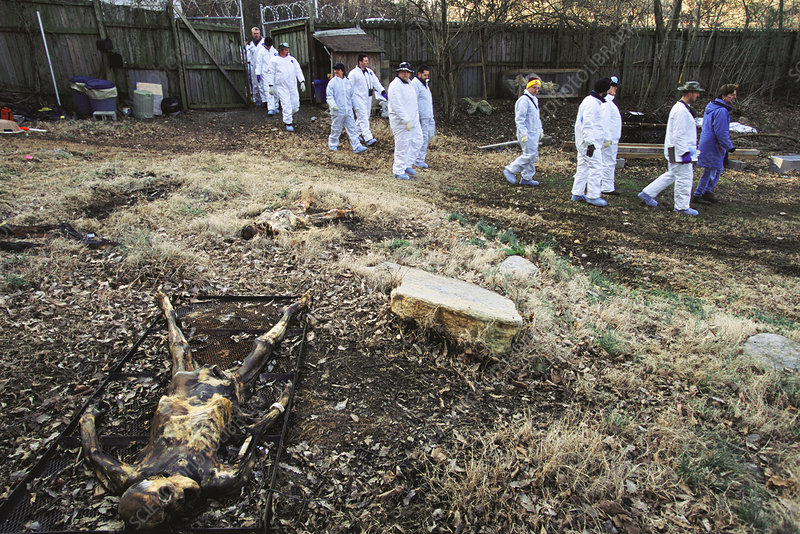 Forensic anthropology training