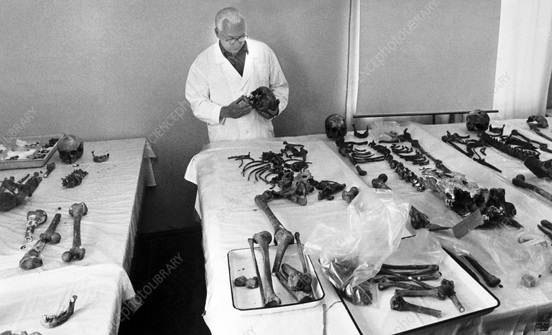 Romanov skeletons, forensic examination