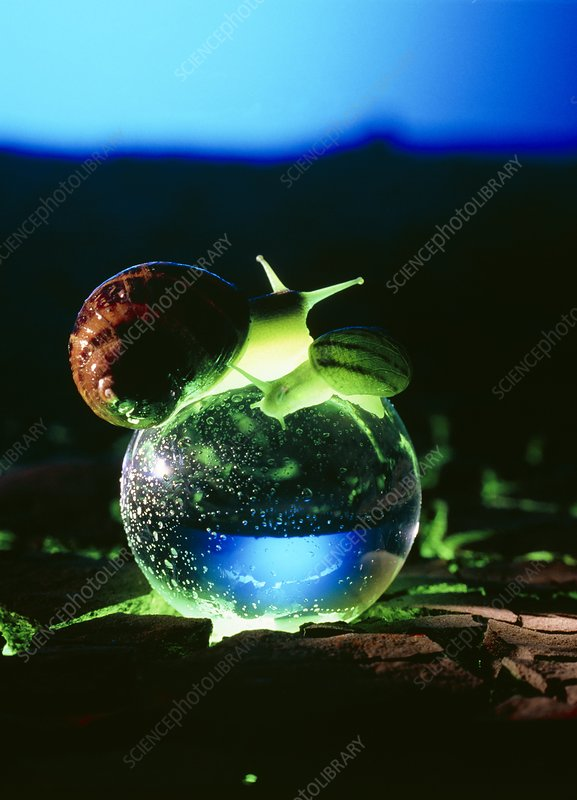 New age snails on crystal ball