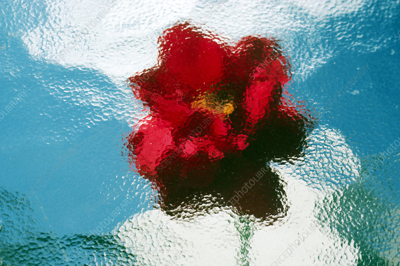 Image of a red flower behind frosted glass