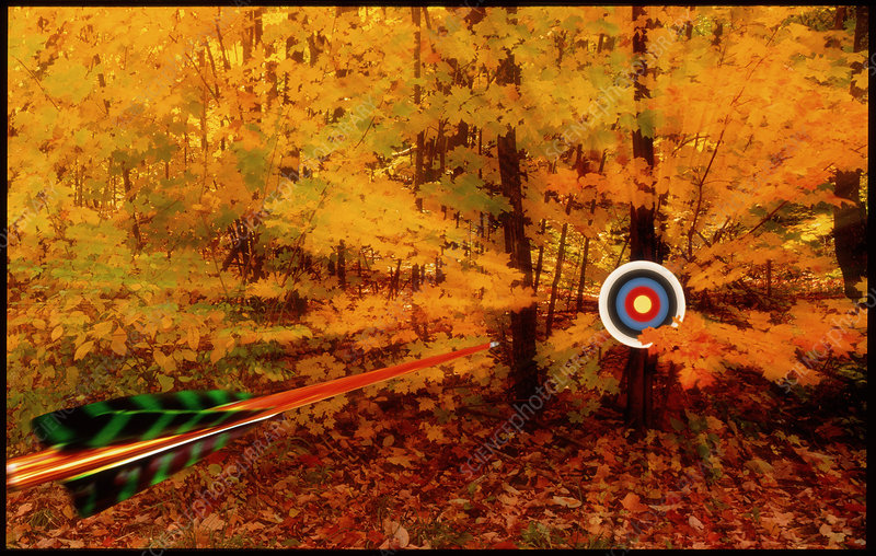 Arrow approaching a target in a wood