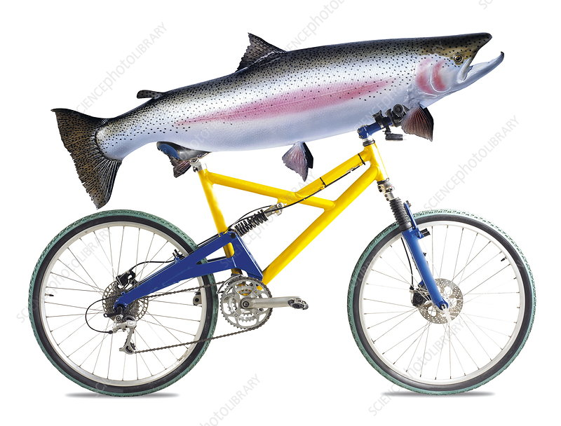 http://www.sciencephoto.com/image/222458/530wm/H3000209-Fish_on_a_bicycle-SPL.jpg