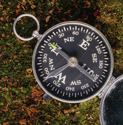 Close-up of a magnetic compass on moss and leaves