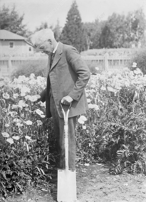 Luther Burbank, US horticulturalist
