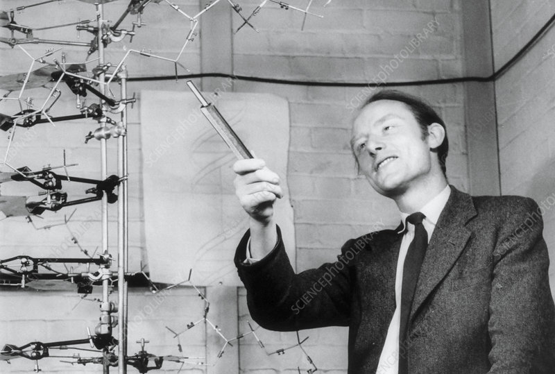 Francis Crick in 1953