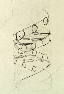 Crick's original DNA sketch