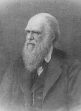 Wood engraving of Charles Darwin