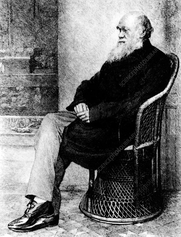 Engraving of Charles Darwin in 1874, aged 65