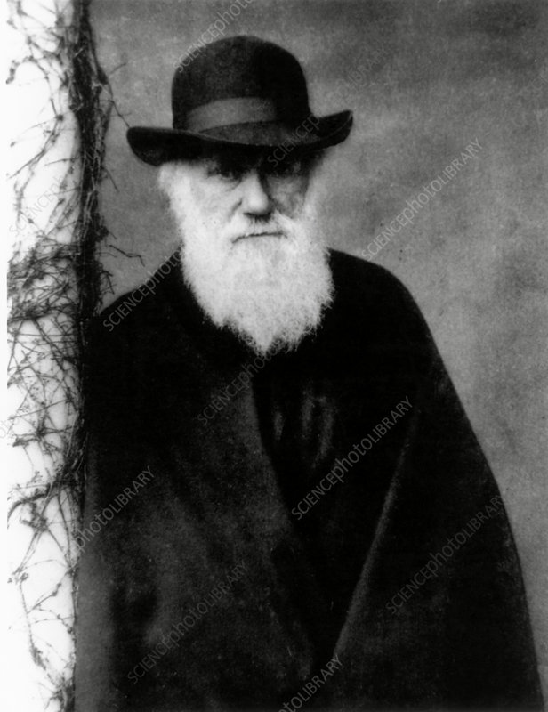 Charles Darwin in 1881, aged 72