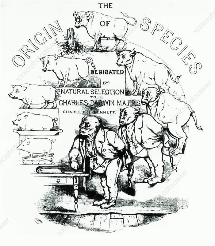 Caricature of Charles Darwin and natural selection - Stock ...