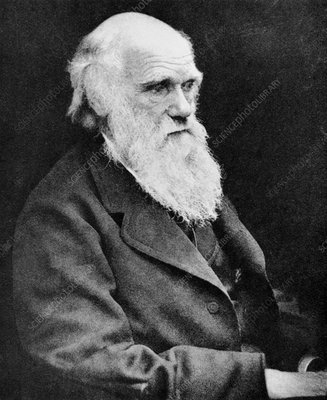 Portrait of Charles Darwin, British naturalist