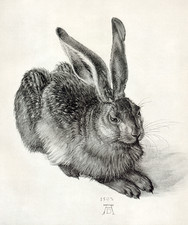 Young hare, by Durer
