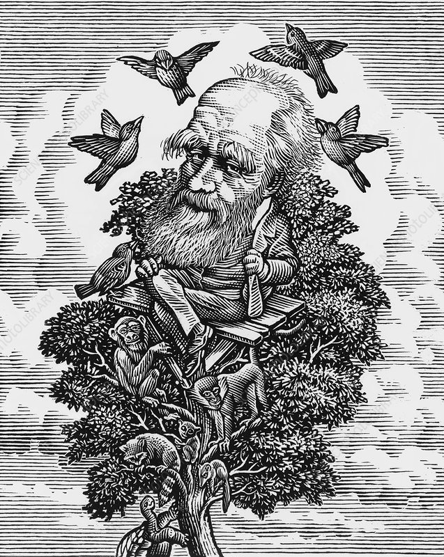Charles Darwin in his evolutionary tree