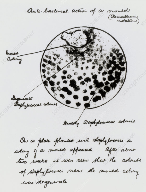 Fleming notes, antibiotics discovery
