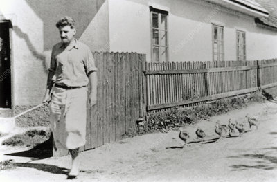 Konrad Lorenz walking with ducklings