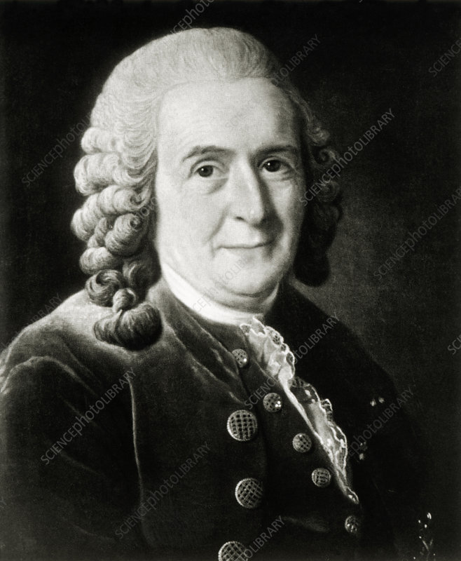 Portrait of Swedish botanist, Carl Linnaeus