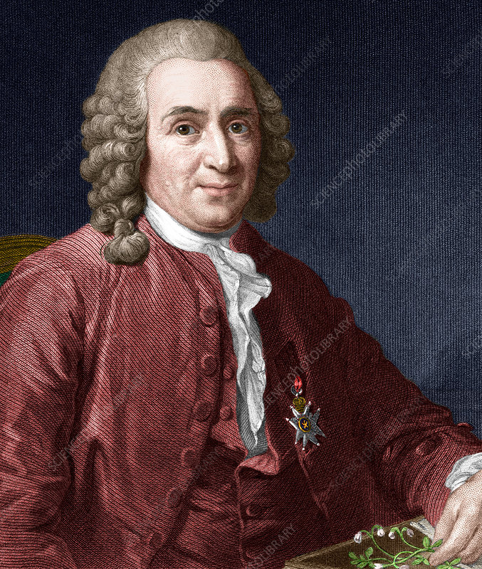 Carl Linnaeus, Swedish botanist - Stock Image - H412/0346 - Science Photo  Library