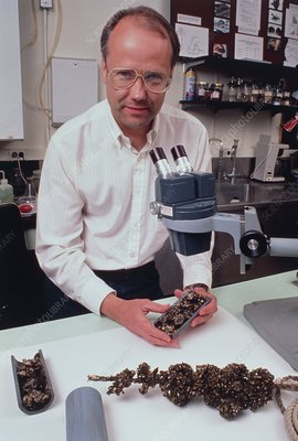 Biologist, Don Schloesser, with Zebra mussels