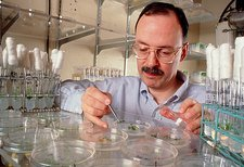 Prof. Somerville, plastic from plants researcher