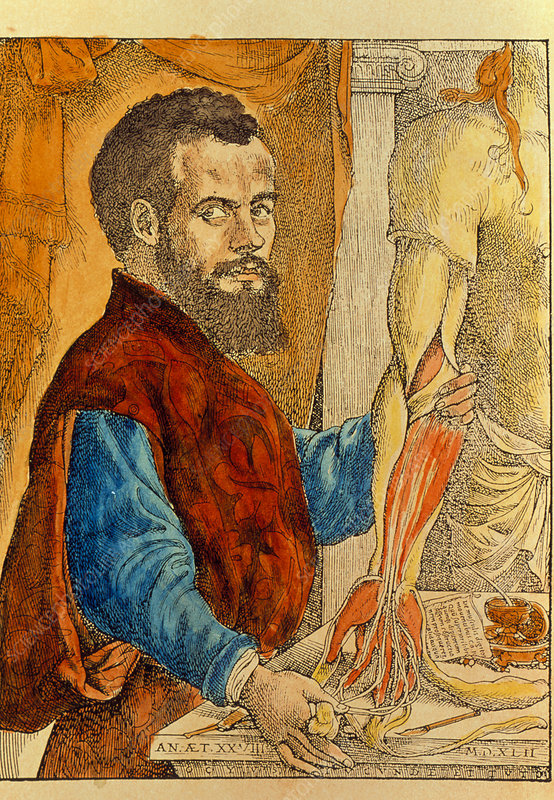 Portrait of the Belgian anatomist Andreas Vesalius