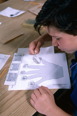 Boy examining fingerprints