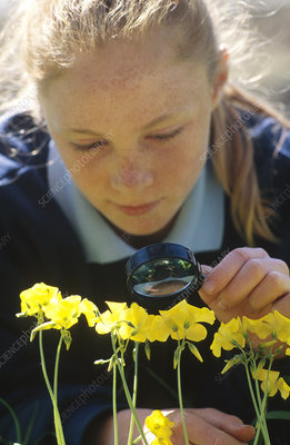 Girl examines flowers