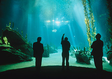 Visitors view of Lisbon Oceanarium's main tank
