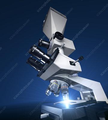 Principles of Light Microscopy - The University of Maryland