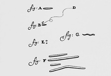 Drawings of animalcules form Leeuwenhoek's letter