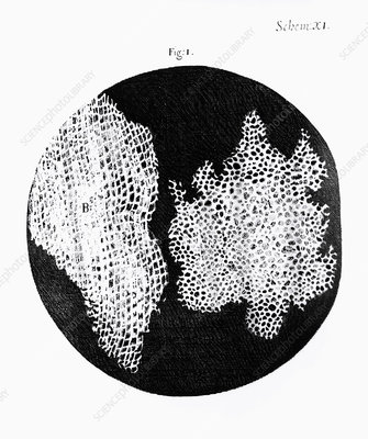Drawing of cork under microscope by Robert Hooke