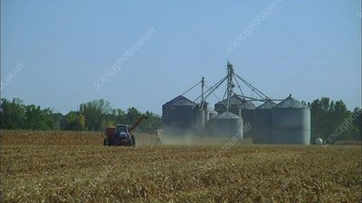 Harvesting corn in Rossville, Indiana