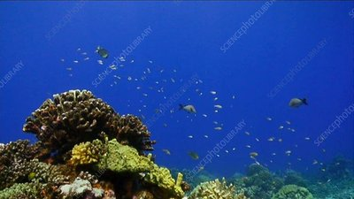 Swimming off a coral reef