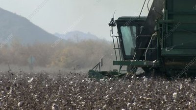 Cotton field harvester